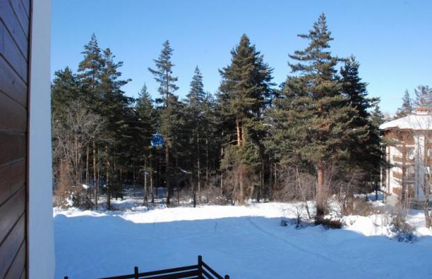 фотографии Pine Trees изображение №8