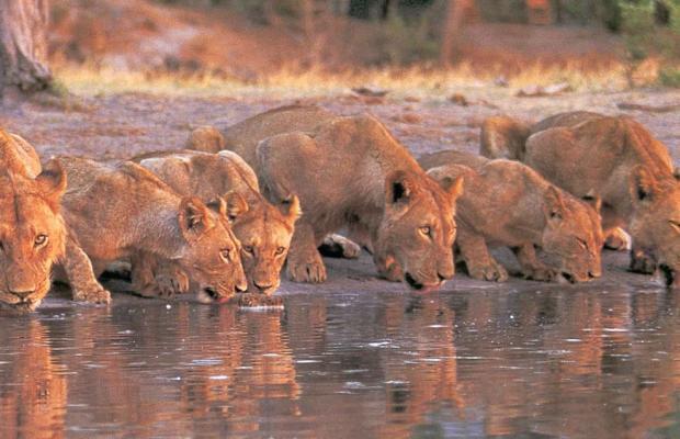 фотографии отеля Mara Serena Safari Lodge изображение №3