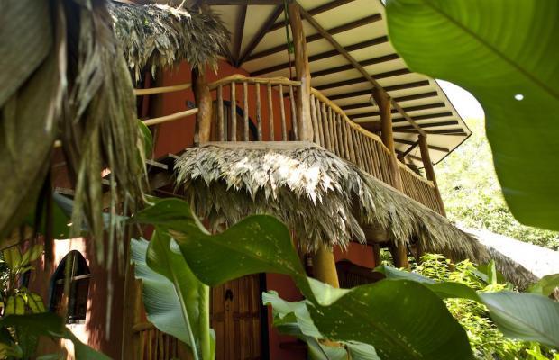 фото отеля Cariblue Beach and Jungle Resort изображение №61