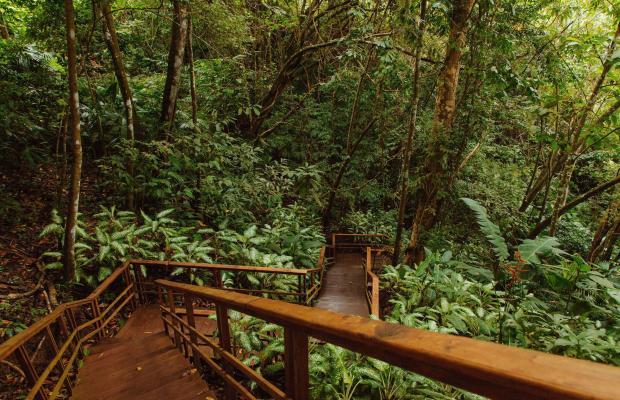 фотографии отеля Lapa Rios изображение №31
