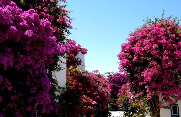 фото Astir of Paros изображение №38