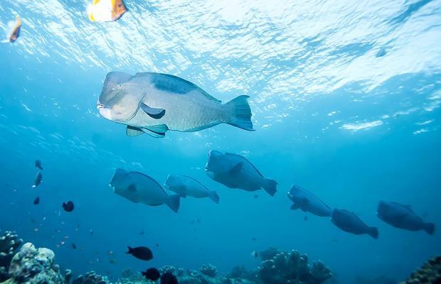 фотографии отеля Wakatobi Dive Resort изображение №23