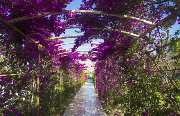 фотографии отеля Daima Biz Resort изображение №15