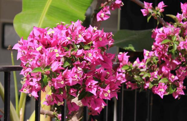 фотографии отеля Hotel Vanilla изображение №31