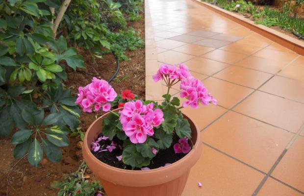 фото отеля Aspri Petra Apartments изображение №49