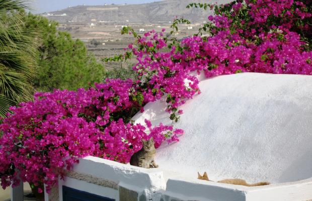 фото отеля Paradise Santorini Resort (ех. Best Western Paradise Hotel) изображение №49