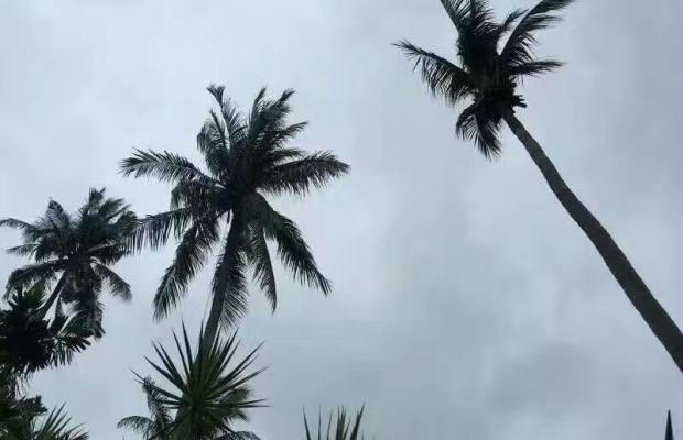 фото отеля Coco Palace Resort изображение №9