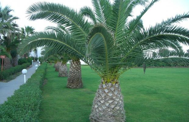 фото отеля Kamari Beach изображение №13
