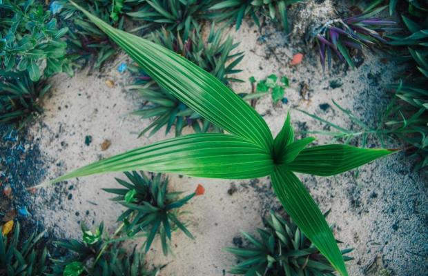 фото Saint Mary Beach Resort (ex. Sao Mai Resort) изображение №30