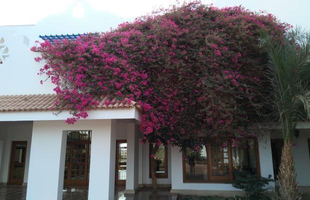 фотографии отеля Lahami Bay Beach Resort & Gardens изображение №51