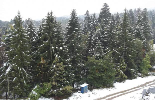 фотографии Snow Doves Sequoia (Сноу Довес Секвоя) изображение №4
